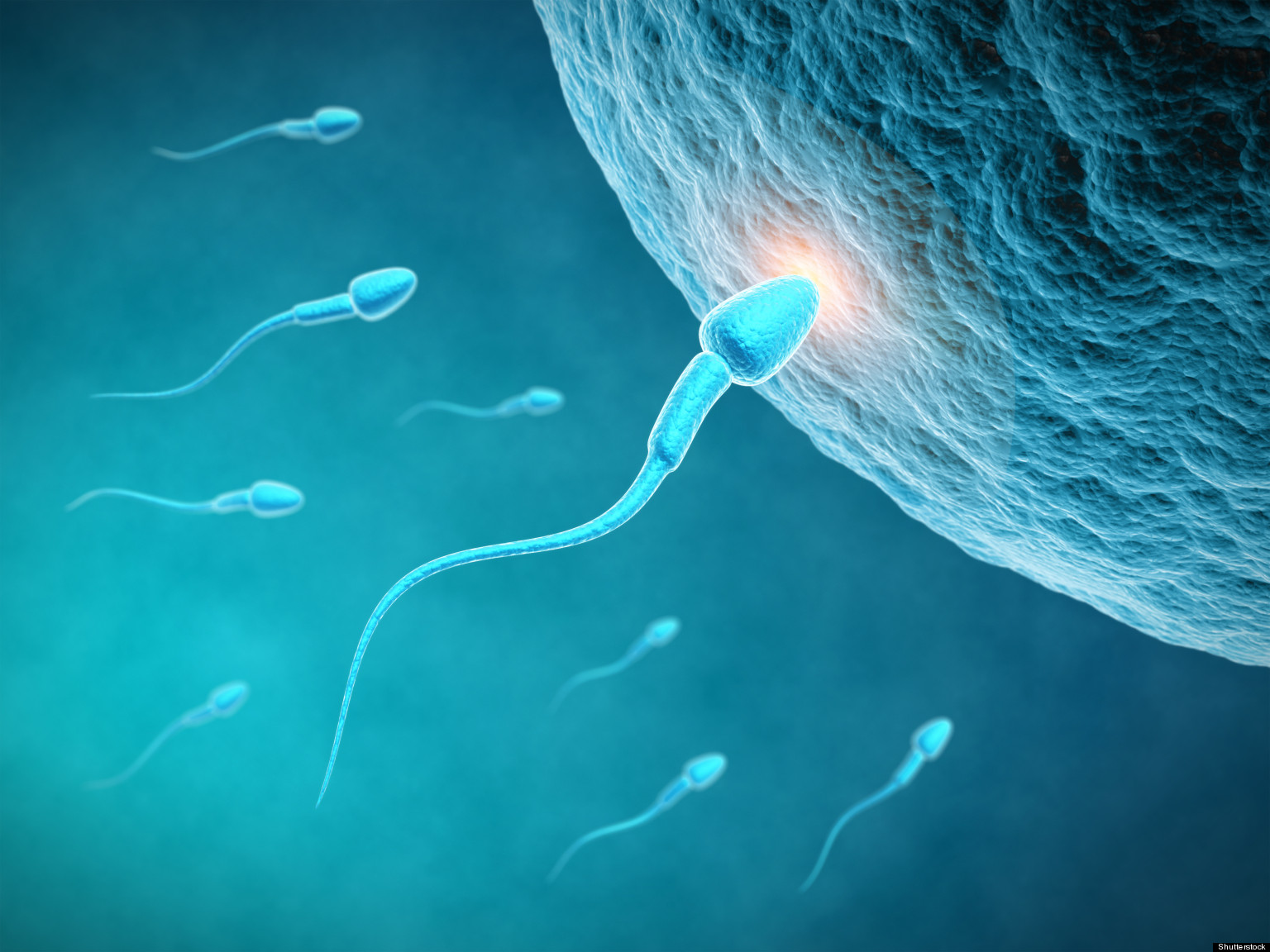 o-SPERM-FERTILITY-facebook